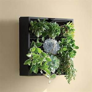 Living art green wall tabletop planter the green head for Living wall art