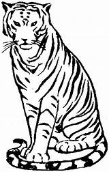 Tiger Coloring Pages Clipart Animals Zoo Bengal Sitting Drawing Clip Wildlife Simple Cliparts Library Clipartmag Without sketch template