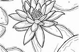 Lily Coloring Easter Pages Lilly Drawing Water Lilies Printable Flowers Getdrawings sketch template
