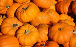 How To Grow Miniature Pumpkins