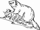 Beaver Coloring Pages Wild Animals River Printable Bank Getcoloringpages Coloringpages101 sketch template
