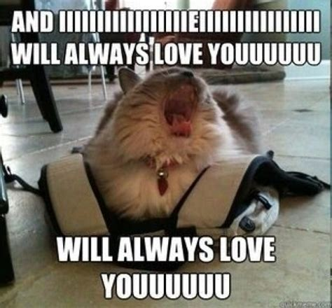 And I Will Always Love You Meme - diva cat meme guy