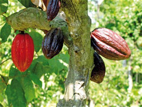 cours de cuisine bio le cacao en equateur satoriz le bio pour tous