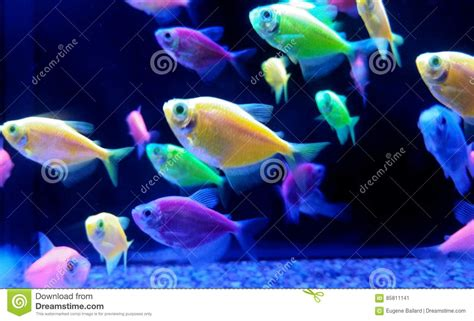 brightly colored fish neon tropical fish stock image image of purple blue