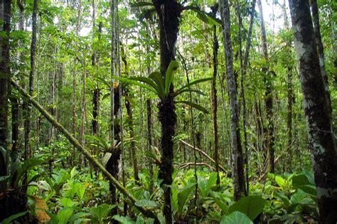 regenwaldtiere