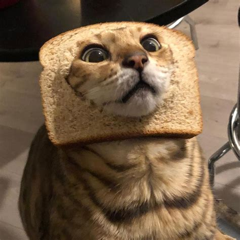 Inbread Cats Cats In Bread