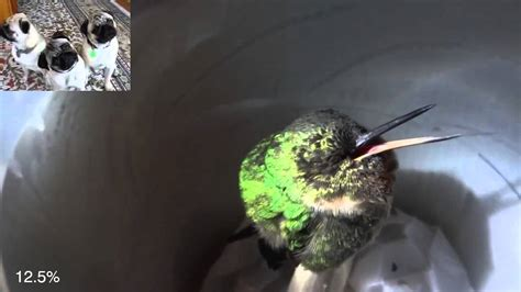 related keywords suggestions for sleeping hummingbird
