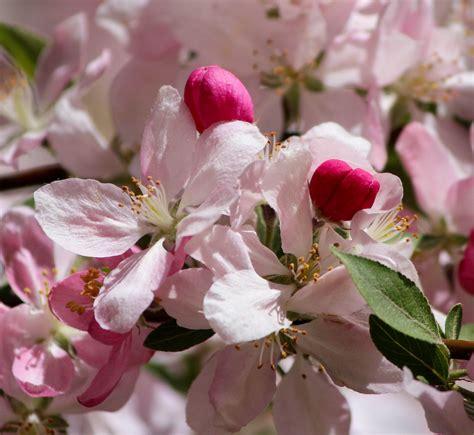 Free Images : branch fruit stem leaf petal bloom