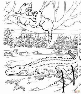 Two Raccoons and Alligator in a Zoo Coloring page | Free ...