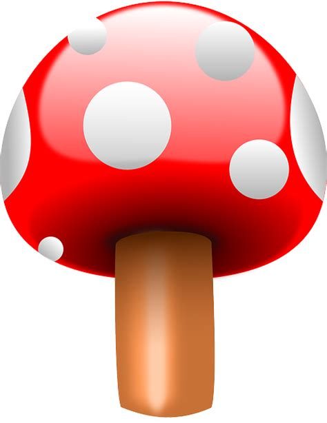 fly agaric mushroom red  vector graphic  pixabay