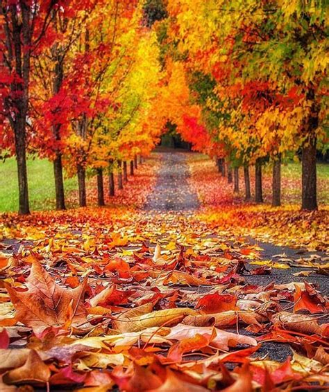 #autumn #fall #leaves  My Favourite Things Autumnfall
