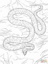 Coloring Snake Gopher Drawing Printable Paper sketch template
