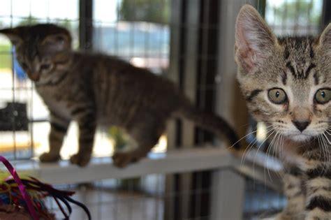 ocala post animal services reduces cat adoption fees