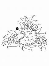 Coloring Hedgehog Pages Animal Animals Printable Templates Template sketch template