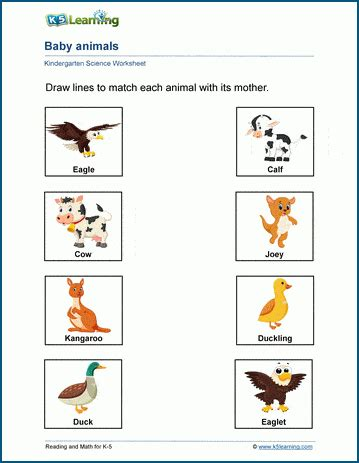 baby animals worksheets  learning