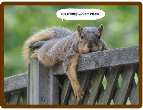 funny squirrel treats still waiting refrigerator tool