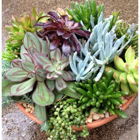beautiful succulent gardens beautiful succulent dish garden by carrie kelly succulent container gardens wreaths walls