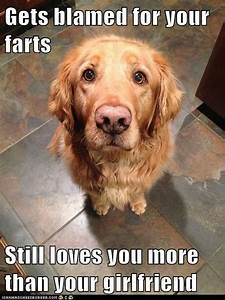 39 s true best friend i has a hotdog pictures