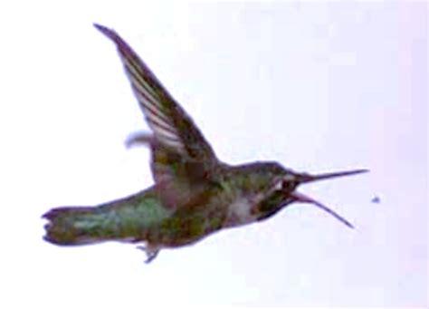 wild birds unlimited birds that eat mosquitoes