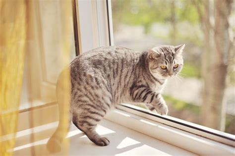 how to keep an outdoor cat indoors if needed pets4homes