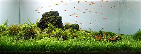 Aquascaping For Beginners by Java Moss How To Grow Carpets Walls Trees And More