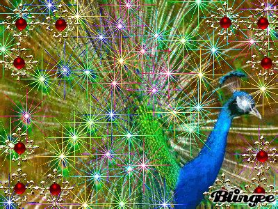 Animated Peacock Wallpapers - animated peacock www pixshark images galleries