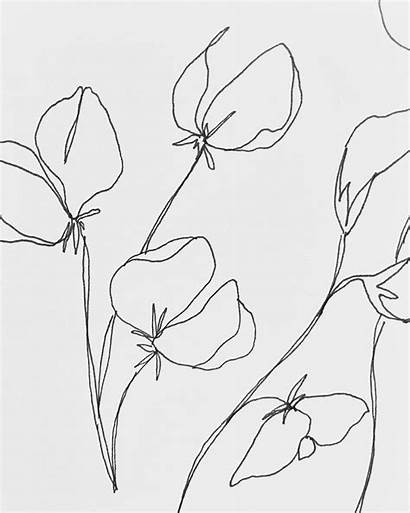 Birth Flower Month Drawing Line Flowers Drawings