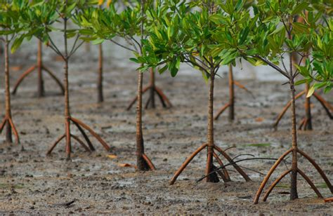plant    plant stopping malpractices