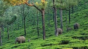 Asian Elephant - Zoo Vertabrates