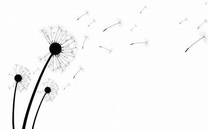 Dandelion Seed Clip Dandelions Illustrations Similar