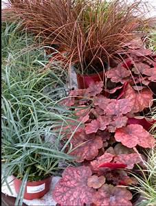 Spitzmäuse Im Garten : die besten 25 pflanzen gegen schnecken ideen auf ~ Lizthompson.info Haus und Dekorationen