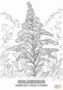 Nebraska State Flower Coloring Page Free Printable