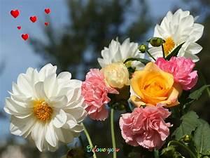Beautiful Flower Backgrounds WallpaperSafari