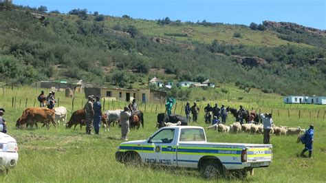Cross-Border stock theft in Eastern Cape addressed in ...