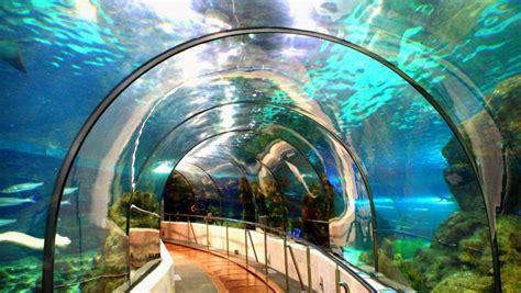 l aquarium de barcelone l aquarium de barcelone barcelona home