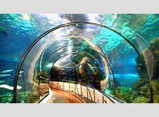 L'aquarium de Barcelone BarcelonaHome Blog