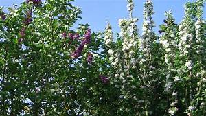 Vermieter Garten Betreten : r cksichtlose vermieter schadenersatz f r gartenpflanzen ~ Lizthompson.info Haus und Dekorationen