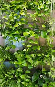 Hängende Pflanzen Aussen : gr ne w nde mit hydro profi line jede pflanze jeder standort ~ Sanjose-hotels-ca.com Haus und Dekorationen