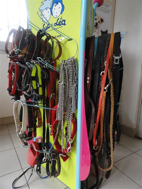 New Display On Sunday Open Day  Dog Rescue Carcassonne