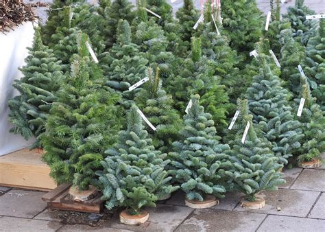 what s the best way to keep your christmas tree fresh