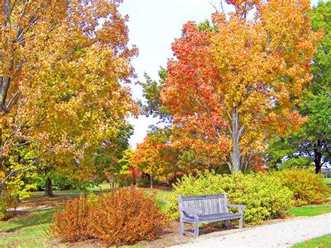 alberi autunnali e panchina in un parco immagine gratis domain pictures