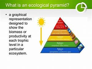 Ecological Pyramids, Food Chain and Food Web