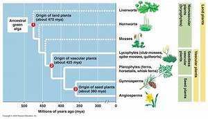 Evolution Tree of Plants images