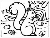 Coloring Nuts Acorns Pages Acorn Nut Template Printable Squirrel Sheet Boowa Cartoon Popular Kwala Getcoloringpages Nest Nose Templates Games Coloringhome sketch template