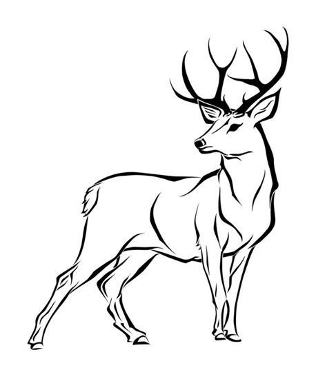 white tail deer drawing  getdrawings