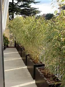 une haie de bambou se proteger du vis a vis pinterest With amenager une terrasse exterieure 13 brise vue balcon decoration exterieure de votre terrasse