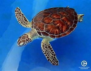 Sea Turtle Rehab Cam   Live Webcams   Clearwater Marine ...
