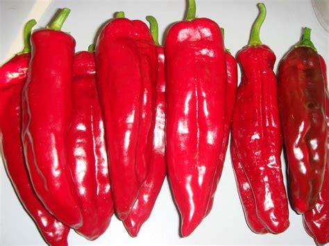 florines rote paprika zum grillen und einlegen