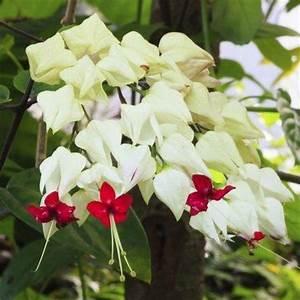 Arbuste D Intérieur : plante grimpante d 39 int rieur liste ooreka ~ Premium-room.com Idées de Décoration
