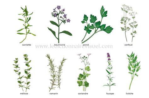 herbes de cuisine alimentation et cuisine gt alimentation gt fines herbes